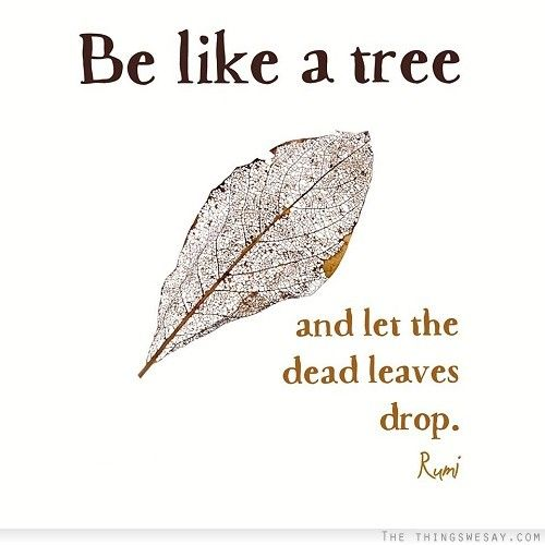 be-like-a-tree-and-let