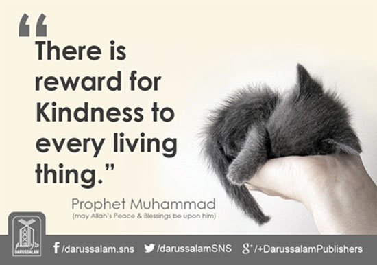 islamic-quotes-about-kindness